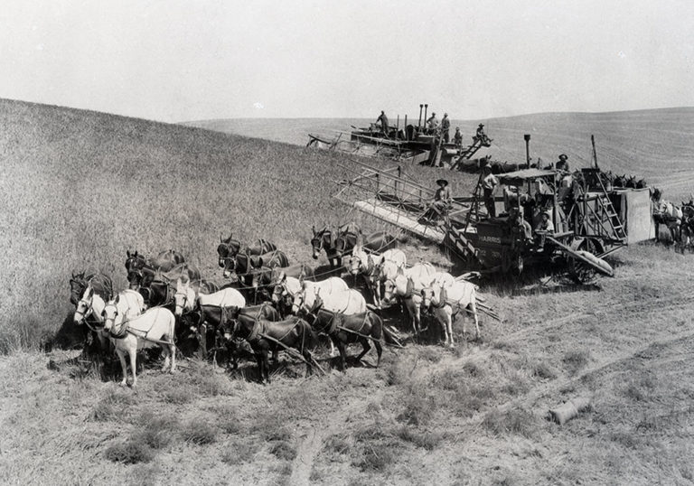 Old Wheat Harvest