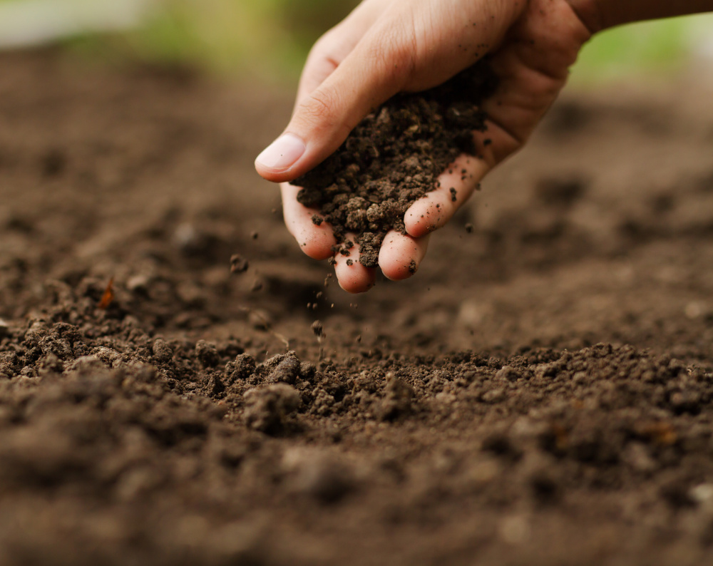 Expert hand of farmer checking soil health before growth a seed of vegetable or plant seedling.