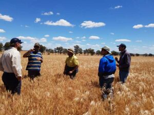 Discussing data collection at the Fox Family Farm near Marrar, New South Wales.