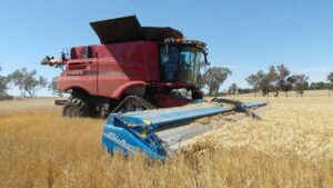 Harvesting an on-farm research plot with a stripper front on the Fox Family Farm near Marrar, New South Wales.