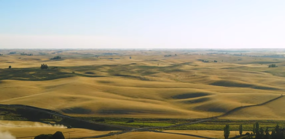 A combine harvests wheat on the rolling hills of the Palouse in Washington state.