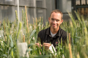 Dr. Arron Carter in the WSU greenhouse with wheat.