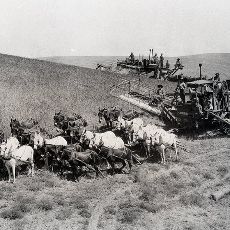 Old Wheat Harvest